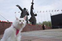Mačke u Rigi_mala